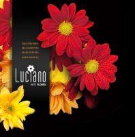 http://s2.portugalio.com/u/lu/ci/luciano-arte-flores-norteshopping_big.jpg